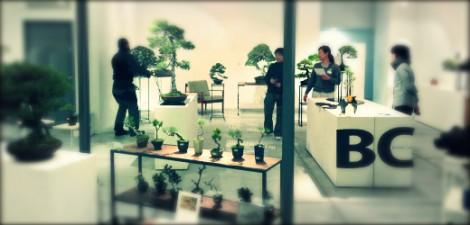 bonsai cafe exposition article