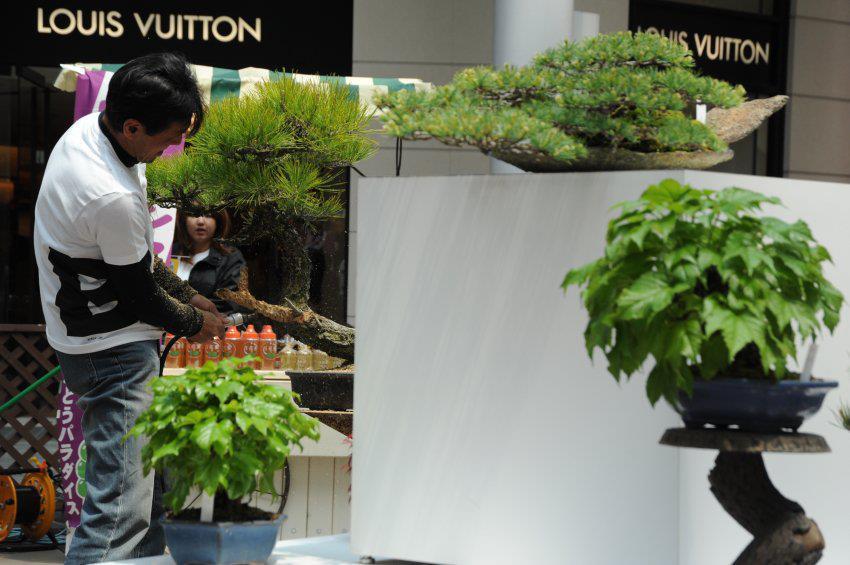 bonsai cafe - koji hiramatsu