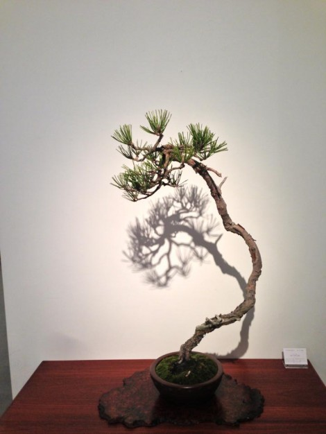 bonsai cafe x schule963 - 06