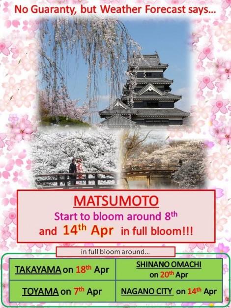 météo des cerisiers au japon
