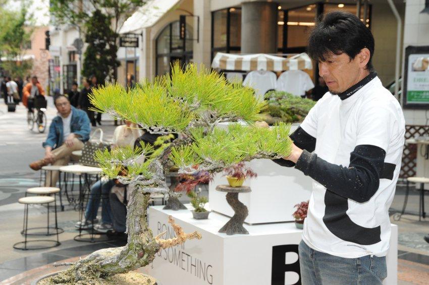 koji hiramatsu - bonsai cafe demonstration
