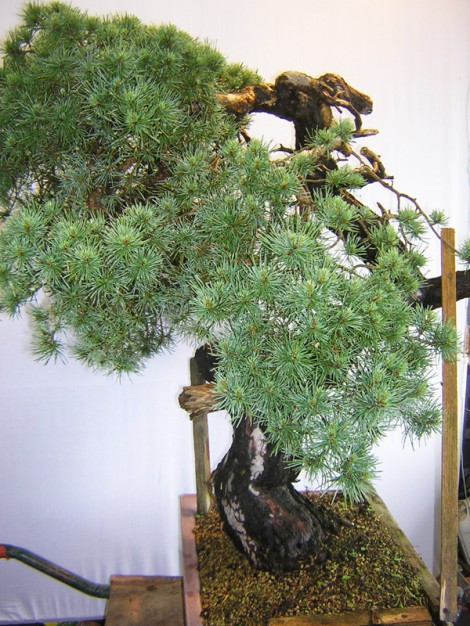 La face naturelle de l'arbre