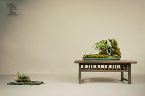 Exposition du bonsai club Girondin - Plantation sur Roche
