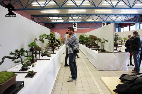 Exposition de BCG 2013 contemplation des bonsai