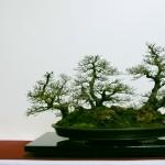La Forêt d'Ormes Champêtres