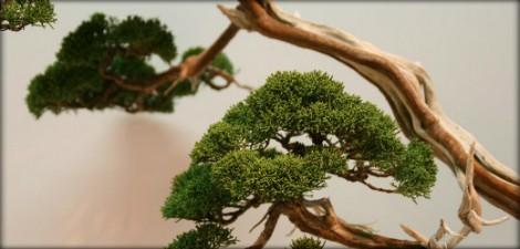 article EBA - les arbres exposés