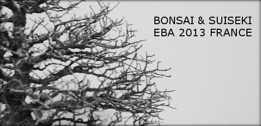 http://actubonsai.com/wp-content/uploads/2013/04/article-eba-2013-viste-de-lexposition-519x250.jpg