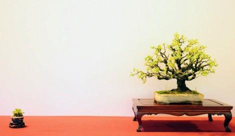 prunus mahaleb - oscar roncari - maxime bolzer