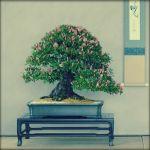 Revue du bonsaï web – mai 2013 n°19