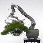 Seijuen – Kiyoshi Hiramatsu