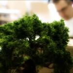 Trouver un club de bonsaï