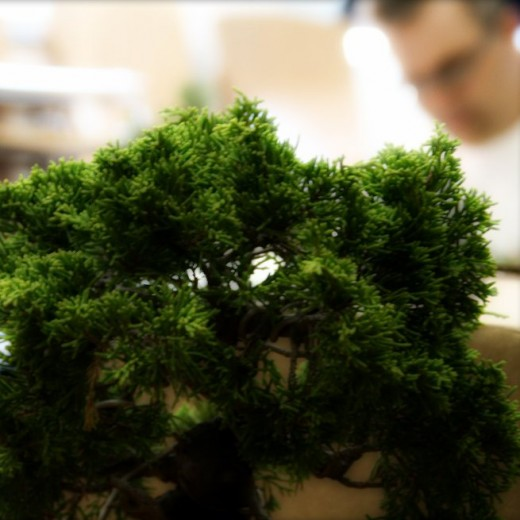 trouver un club de bonsai