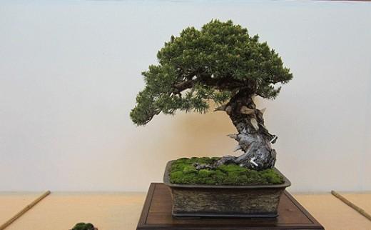 gaby becker exposition de bonsai