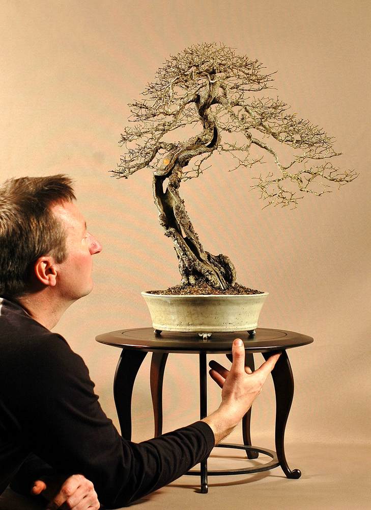 Interview de fabrice huertas - Orme de chine bonsai ...