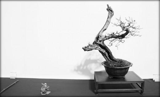 Quel avenir pour le bonsaï français?
