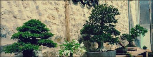 espace de travail destination bonsai