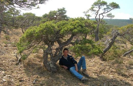 artisan bonsai - prelevement