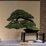 Les expositions de bonsaï en 2014 au Japon