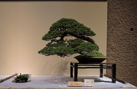 expositions de bonsai au japon en 2014 par actubonsai