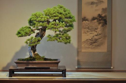 pin blanc en tokonoma - 01