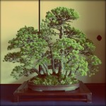 Revue du bonsai web – septembre 2013 n°22