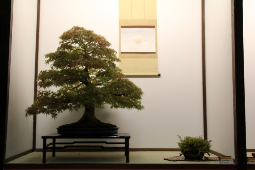 acer palmatum tokonoma dany use - saulieu 2013
