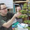 apprendre le bonsai au japon avec koji hiramatsu