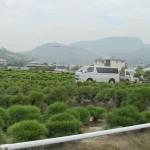 J-9 : visiter les pépinières de Kinashi
