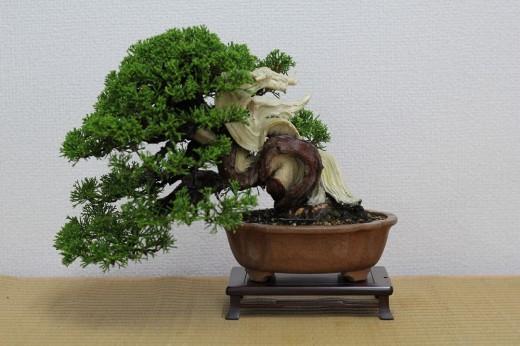 bonsai shohin genévrier hiramatsu