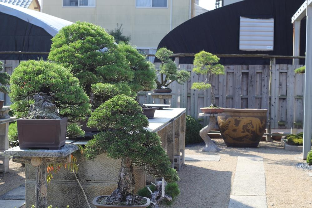 chinshoen kinashi vue sur le jardin 1