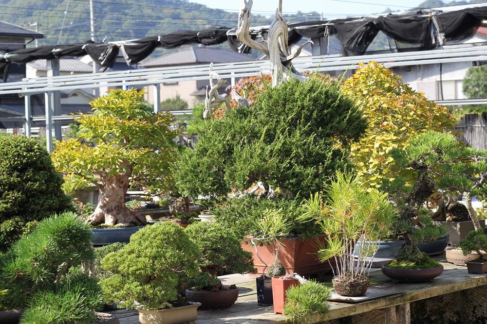 chinshoen kinashi vue sur le jardin 2