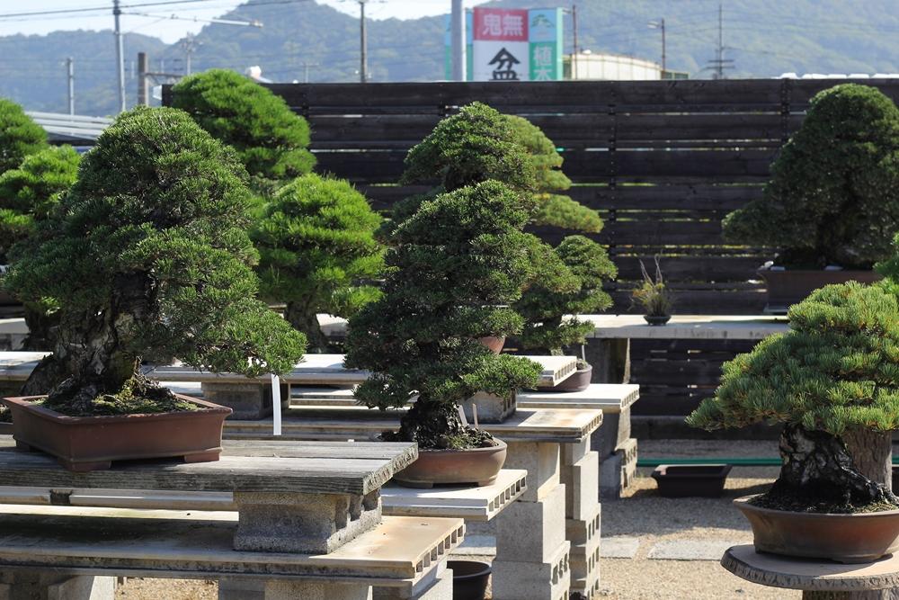 chinshoen kinashi vue sur le jardin 3