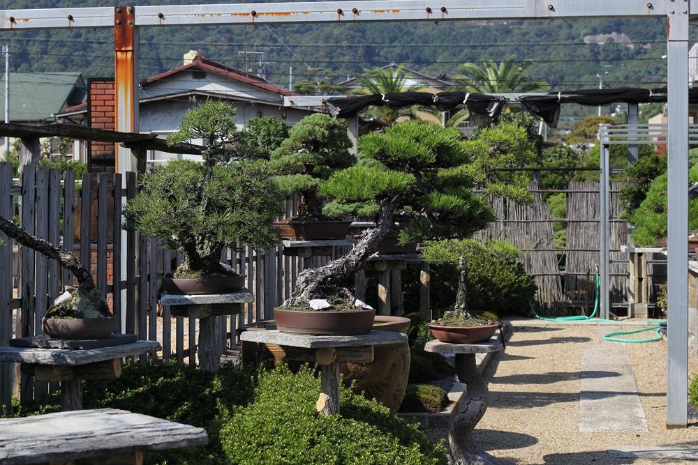 chinshoen kinashi vue sur le jardin 4