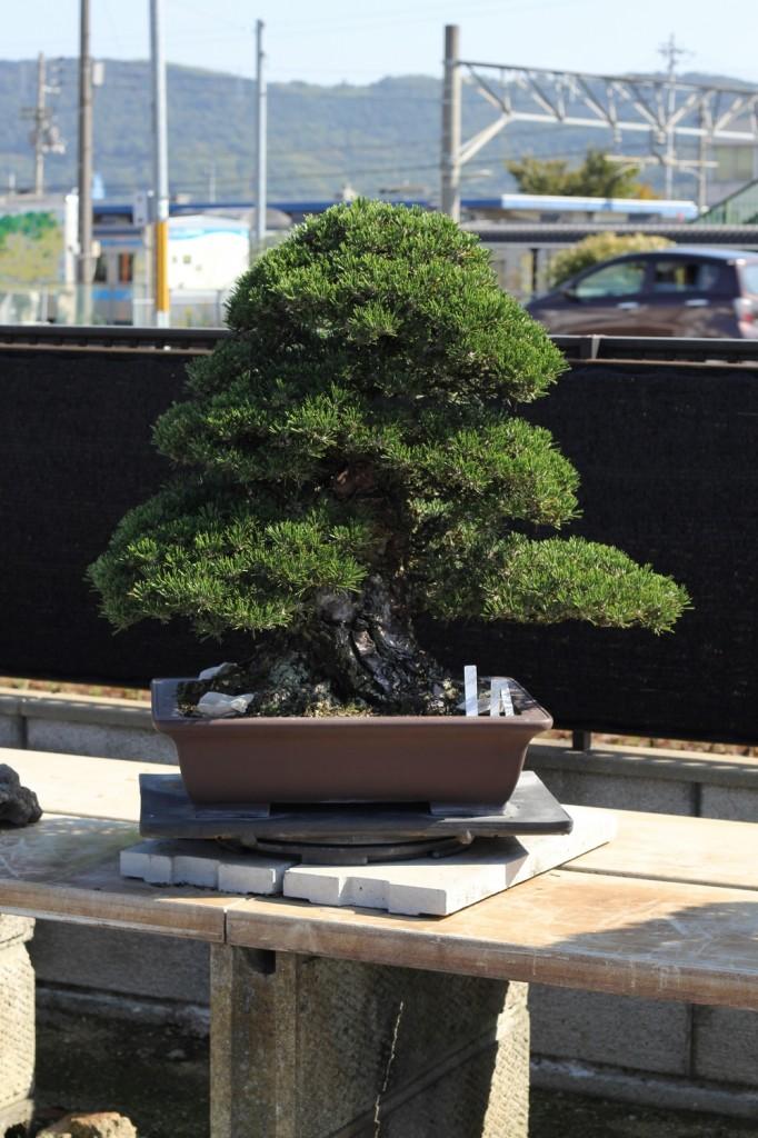 chinshoen kinashi vue sur le jardin 5