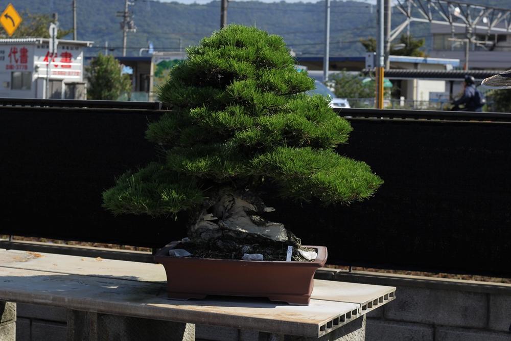 chinshoen kinashi vue sur le jardin 6