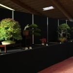Les ingrédients d'une très grande exposition de bonsaï – Saulieu 2013