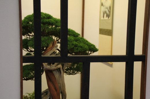juniperus tokonoma dany use - autre angle
