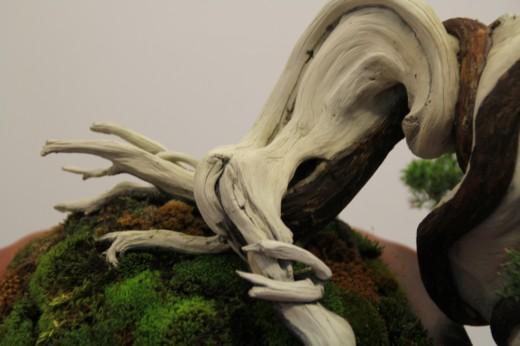 juniperus tokonoma mauro stemberger - bois mort