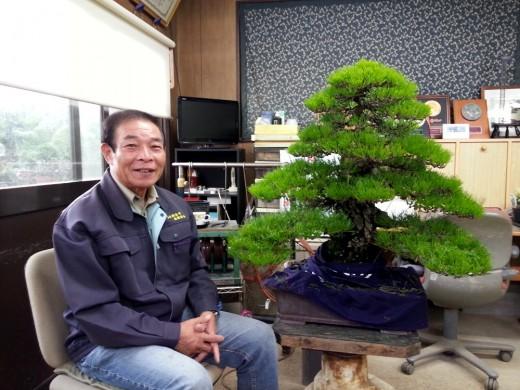 kiyoshi hiramatsu au travail sur un grand pin noir