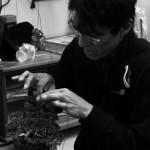 Mise en forme d'un genévrier shohin par Koji Hiramatsu