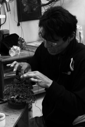 koji hiramatsu fini la mise en forme d'un petit juniperus