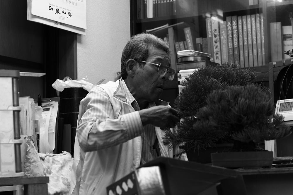 le père de koji hiramatsu au travail sur un pin noir