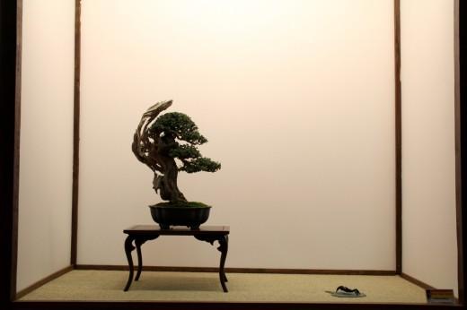 olea tokonoma mauro stemberger - saulieu 2013