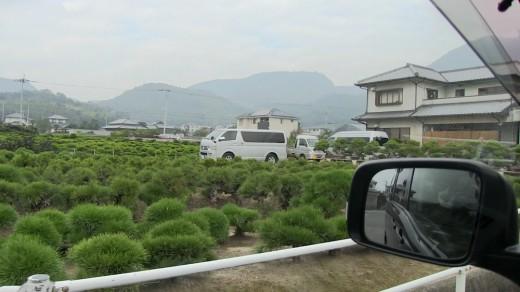 pépinière de kokubunji