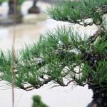 pin travaillé à l'ASPAC en 2011 par koji hiramatsu 01