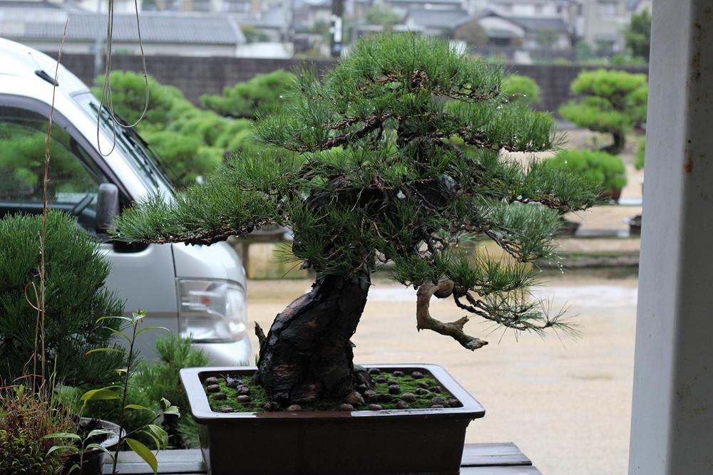 pin travaillé à l'ASPAC en 2011 par koji hiramatsu