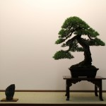 Prendre des photos à Saulieu à l'Europen Bonsai-San Show