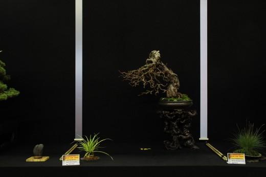 saulieu 2013 - actinida arguta - propriétaire joel pouzet - pot john pitt