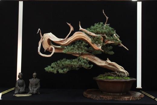saulieu 2013 - juniperus
