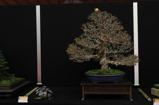 saulieu 2013 - punica granatum - propriétaire frederic chenal - pot tokoname